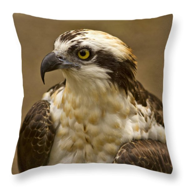 Osprey Portrait Throw Pillow by Anne Rodkin