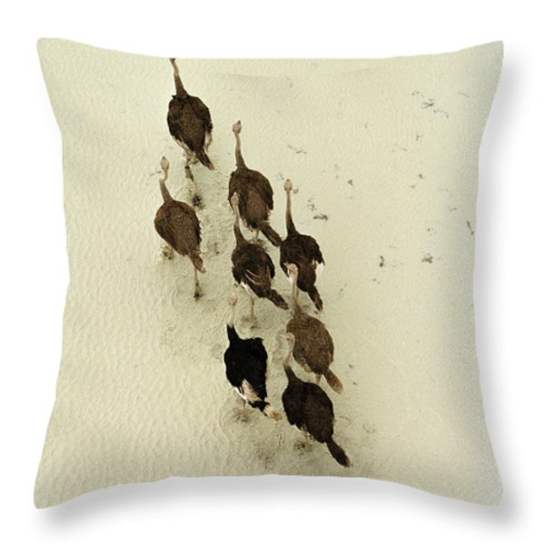 Ostriches Crossing The Makgadikgadi Throw Pillow by Bobby Haas