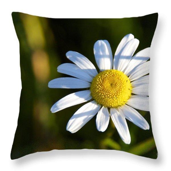 Ox-eye Daisy Throw Pillow by Sean Griffin