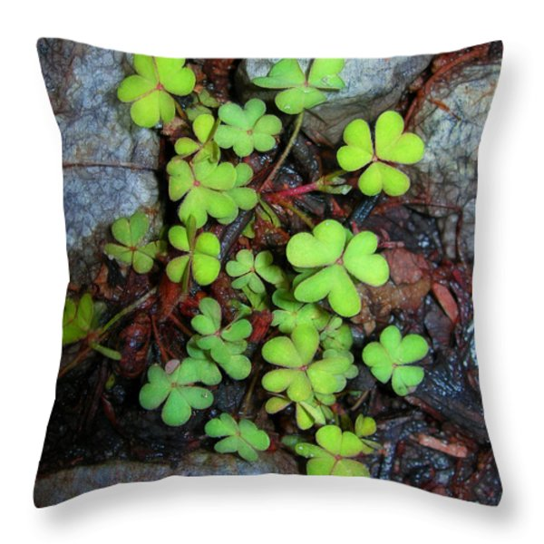 Oxalis Throw Pillow by Judi Bagwell