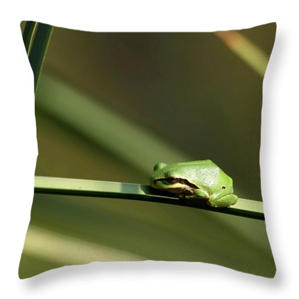 Pacific Tree Frog Throw Pillow by Angie Vogel