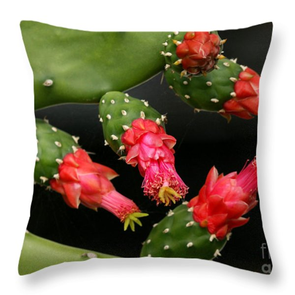 Paddle Cactus Flowers Throw Pillow by Sabrina L Ryan