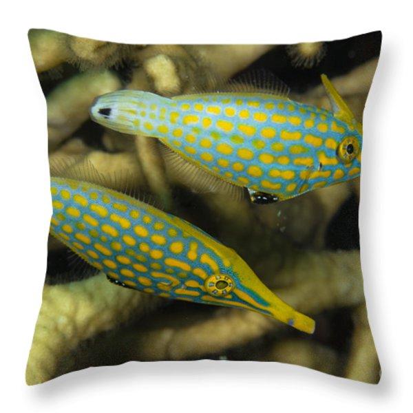 Pair Of Comet Fish, Australia Throw Pillow by Todd Winner
