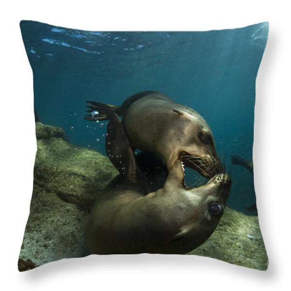 Pair Of Playful Sea Lions, La Paz Throw Pillow by Todd Winner