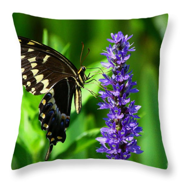 Palamedes Swallowtail Butterfly Throw Pillow by Barbara Bowen