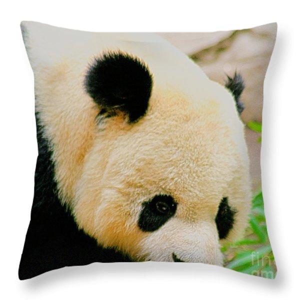 Panda  Throw Pillow by Cheryl Young