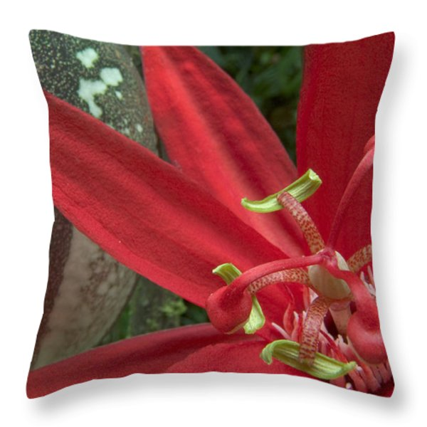 Passion Flower Blossom Costa Rica Throw Pillow by Piotr Naskrecki