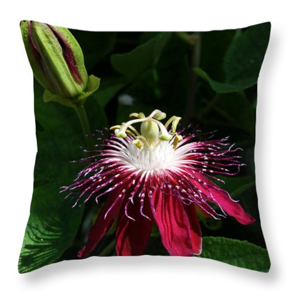 Passion Flower Throw Pillow by Eva Kaufman
