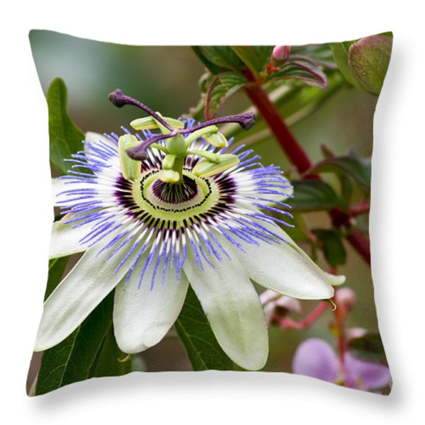 Passion Flower Throw Pillow by Teresa Zieba