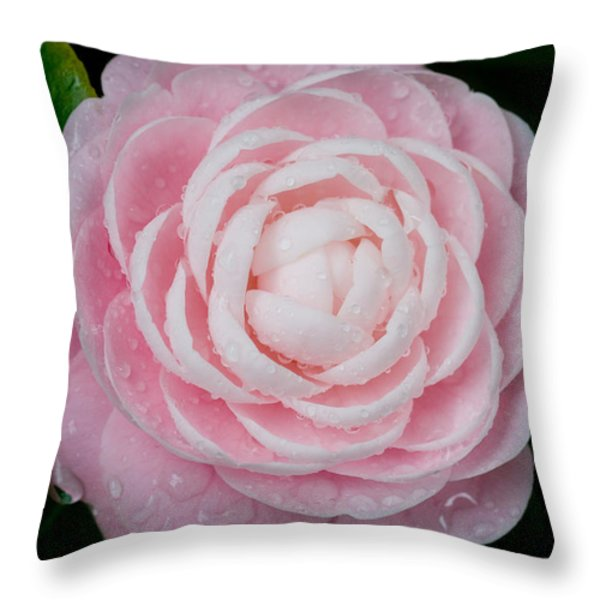 Pefectly Pink Throw Pillow by Rich Franco