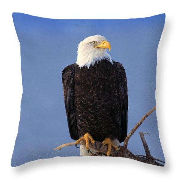 Perched Bald Eagle Throw Pillow by Natural Selection David Ponton