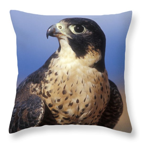 Peregrine Falcon Throw Pillow by Sandra Bronstein