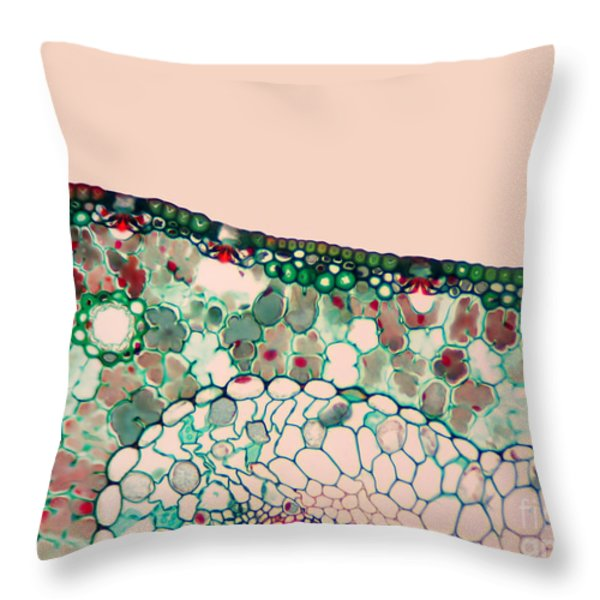 Pine Needle Light Micrograph Throw Pillow by Gary DeLong and Photo Researchers