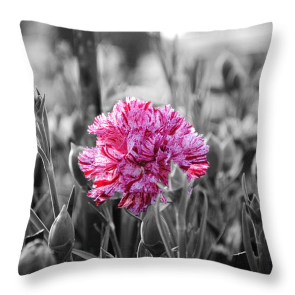 Pink Carnation Throw Pillow by Sumit Mehndiratta