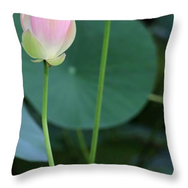 Pink Lotus Buds Throw Pillow by Sabrina L Ryan