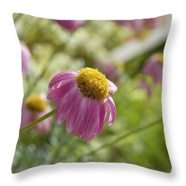 Pink Persuasion Throw Pillow by Robert Meyers-Lussier