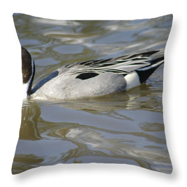 Pintail Duck Throw Pillow by Marilyn Wilson