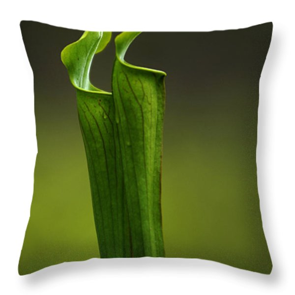 Pitcher Plants 2 Throw Pillow by Bob Christopher