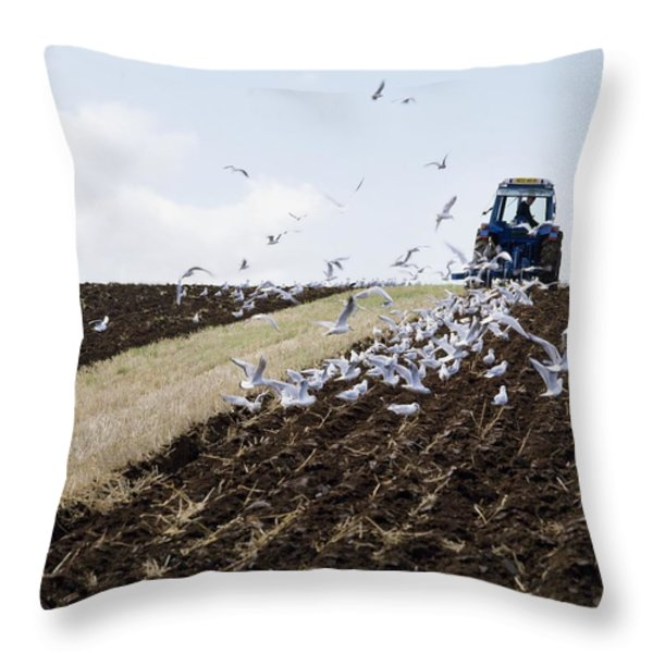 Ploughing With Seagulls, Co Down Throw Pillow by The Irish Image Collection