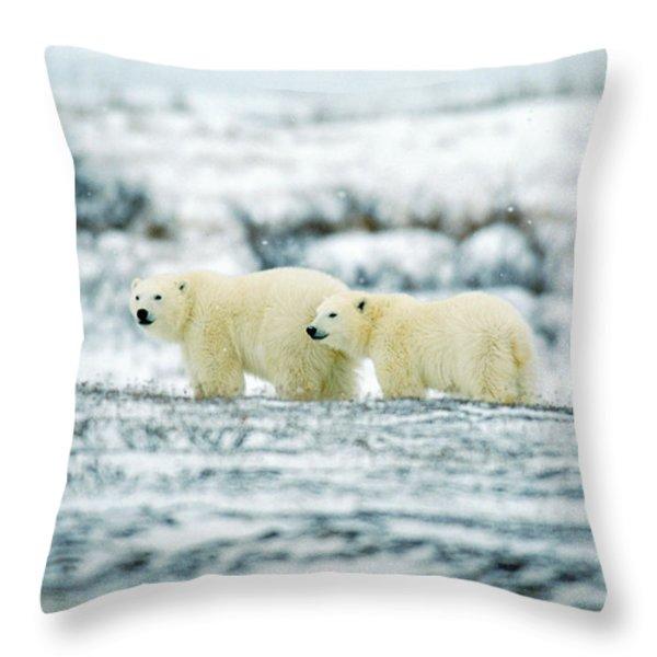 Polar Bears, Churchill, Manitoba Throw Pillow by Mike Grandmailson