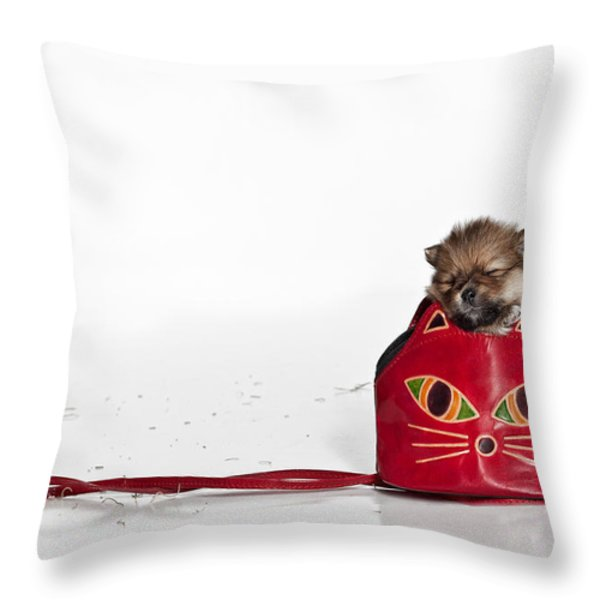 Pomeranian 2 Throw Pillow by Everet Regal