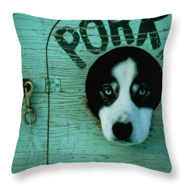 Porky Is One Of Jan Masseks Race Dogs Throw Pillow by Chris Johns