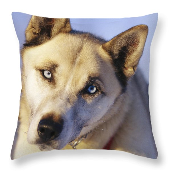 Portrait Of A Blue-eyed Husky Throw Pillow by Paul Nicklen