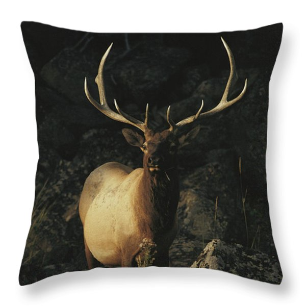 Portrait Of A Bull Elk With Large Throw Pillow by Michael S. Quinton