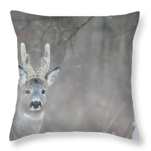 Portrait Of A Roe Buck Throw Pillow by Ulrich Kunst And Bettina Scheidulin