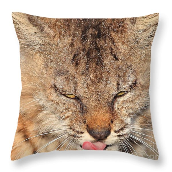 Portrait of a Young Bob Cat 02 Throw Pillow by Wingsdomain Art and Photography