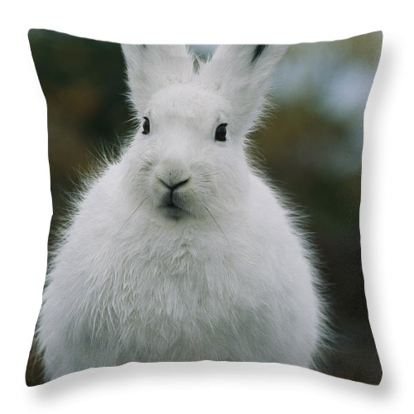 Portrait Of An Arctic Hare Throw Pillow by Norbert Rosing