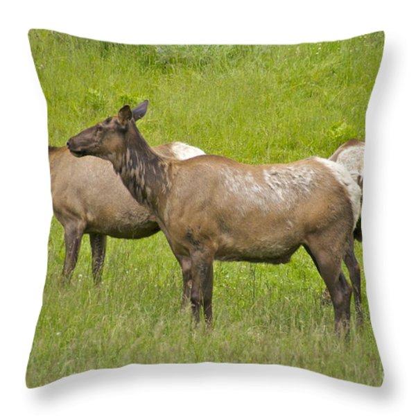 Predator Watch Throw Pillow by Sean Griffin