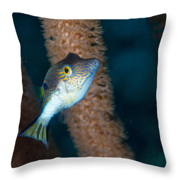 Puffer Profile Throw Pillow by Jean Noren