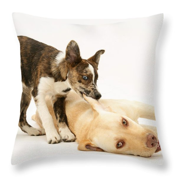 Pup Biting Lab On The Ear Throw Pillow by Mark Taylor