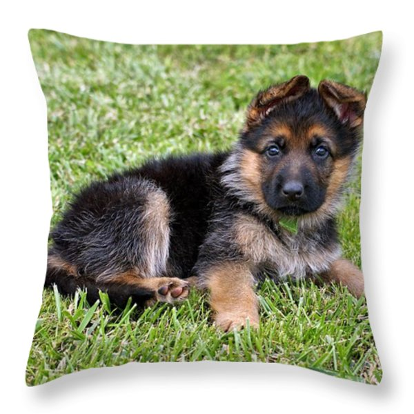 Puppy in the Spring Throw Pillow by Sandy Keeton