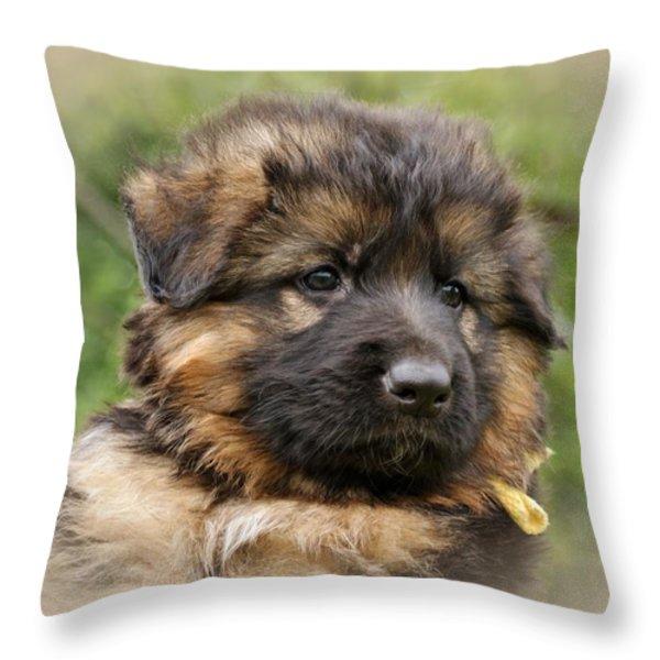 Puppy Portrait II Throw Pillow by Sandy Keeton