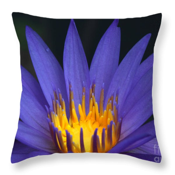Purple And Yellow Water Lily Throw Pillow by Sabrina L Ryan