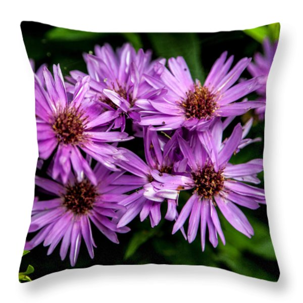 Purple Aster Blooms Throw Pillow by John Haldane