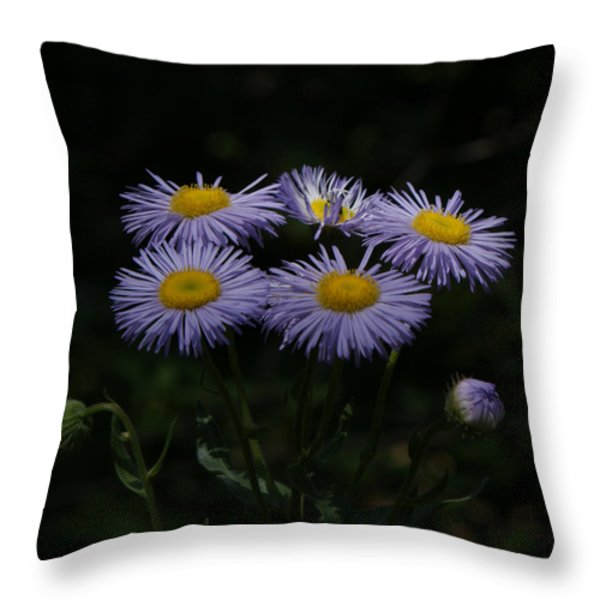 Purple Asters Throw Pillow by Ernie Echols
