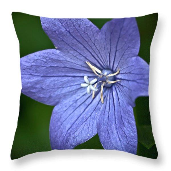 Purple Balloon Flower Throw Pillow by  onyonet  photo studios