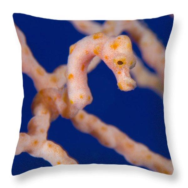 Pygmy Seahorse On Sea Fan, Papua New Throw Pillow by Steve Jones