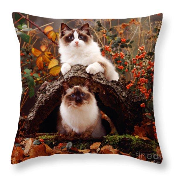 Ragdoll Kitten And Birman Kitten Throw Pillow by Jane Burton
