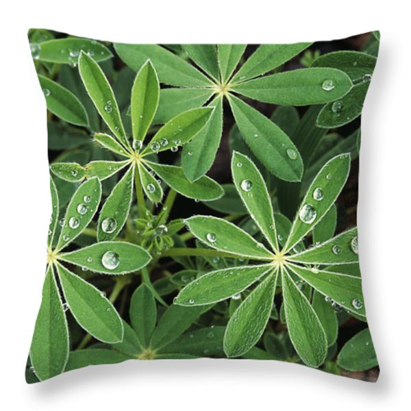 Raindrops on Lupine Throw Pillow by Greg Vaughn - Printscapes