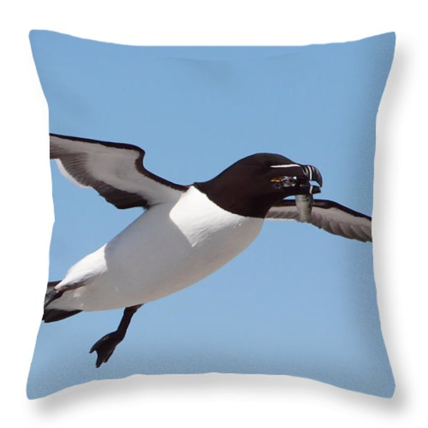 Razorbill In Flight Throw Pillow by Bruce J Robinson