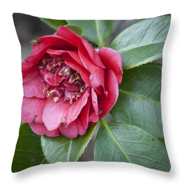 Red Camellia Squared Throw Pillow by Teresa Mucha