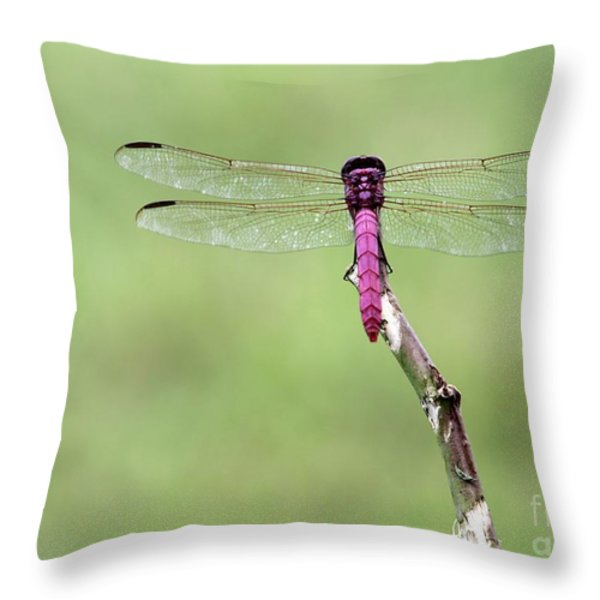 Red Dragonfly Dancer Throw Pillow by Sabrina L Ryan