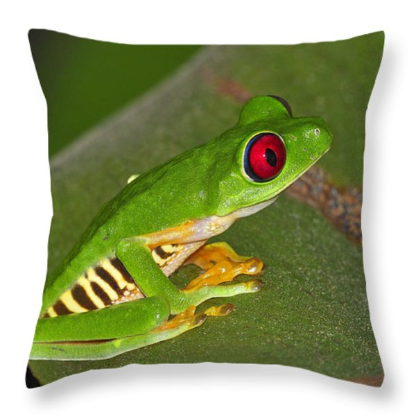Red-eyed Leaf Frog Throw Pillow by Tony Beck