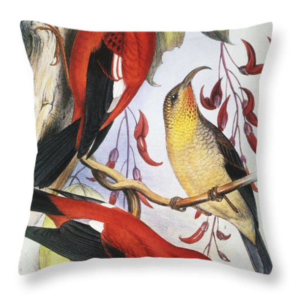Red Hawaiian Honeycreeper Throw Pillow by Hawaiian Legacy Archive - Printscapes