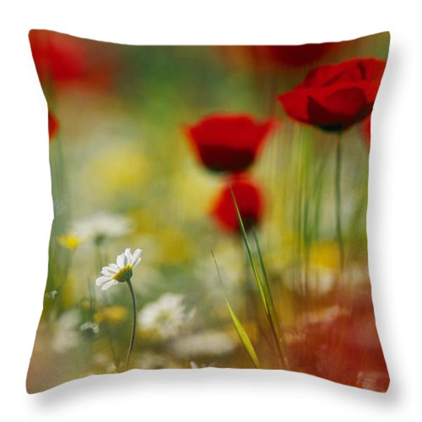 Red Poppies And Small Daisies Bloom Throw Pillow by Annie Griffiths