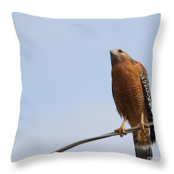 Red-shouldered Hawk . 7d10252 Throw Pillow by Wingsdomain Art and Photography